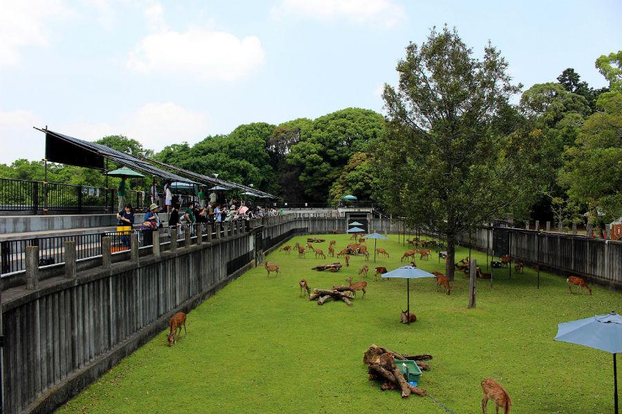 「鹿苑」子鹿公開エリア(この場所への立ち入りは、子鹿公開と鹿の角きりの年2回のみ)