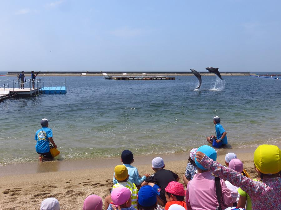 「須磨ドルフィンコースト」では、イルカが海でジャンプするのを見られることも