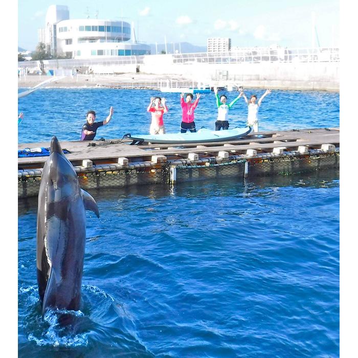 イルカのそばでSUPヨガをするスペシャル感が魅力