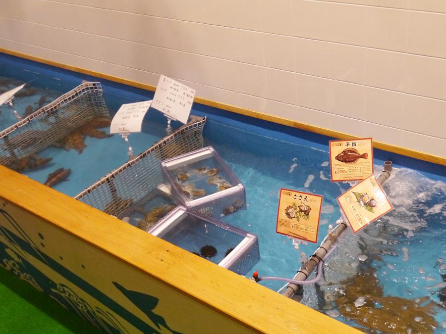 魚ごとに区切られた水槽