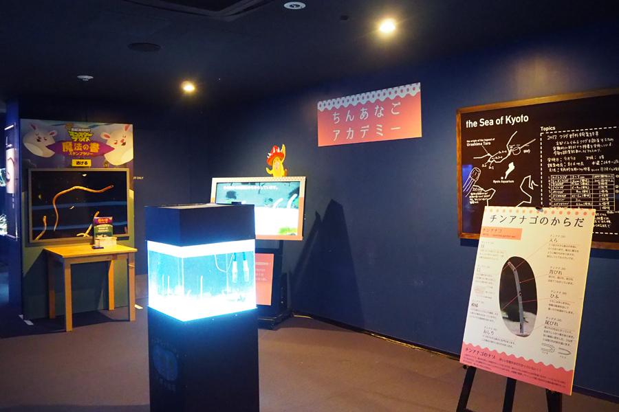 映像やパネルから、チンアナゴの生態を学ぶことができる