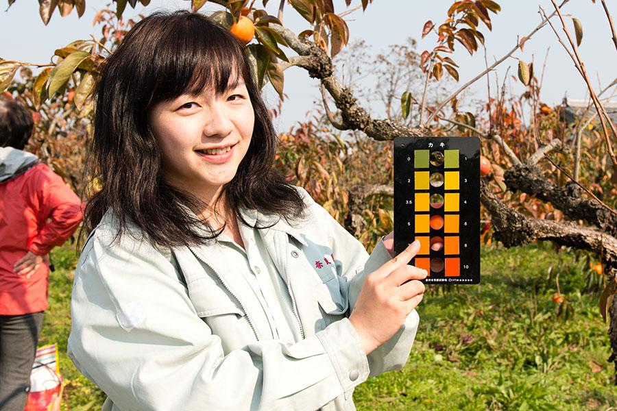 奈良県中部農林振興事務所の西井慈さん。カラーチャートに柿をあてて収穫時期を判断する(5日・御所市)