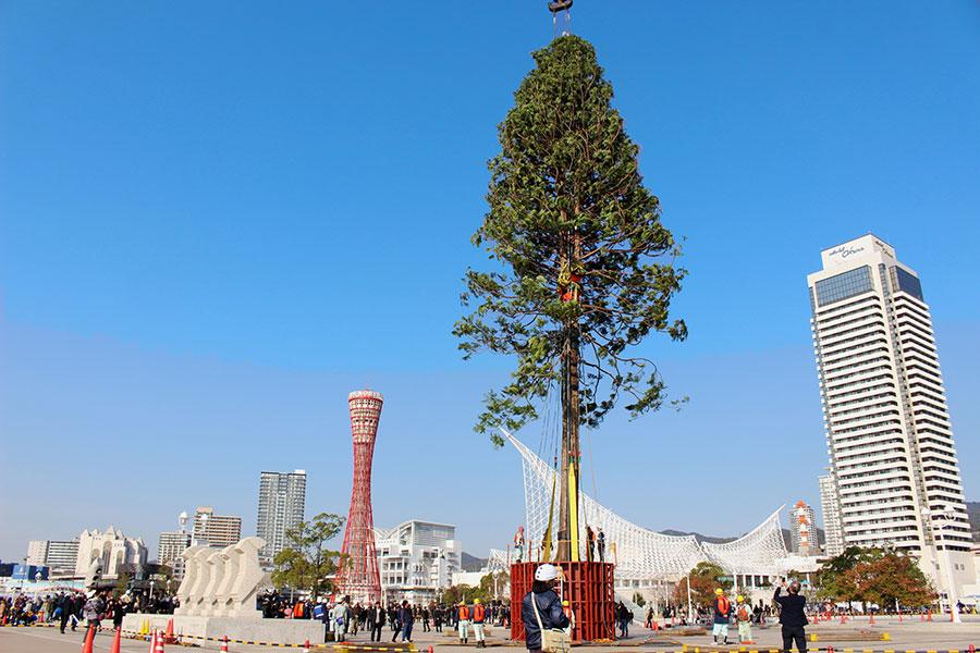神戸メリケンパークの南東に立った「あすなろの木」。クリスマスの新名所となりそうだ(17日・神戸市内)
