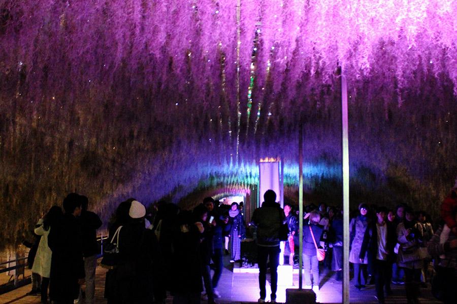 全長60mの空中植物がぶらさがるトンネルもライトアップされる(2日・神戸市内)