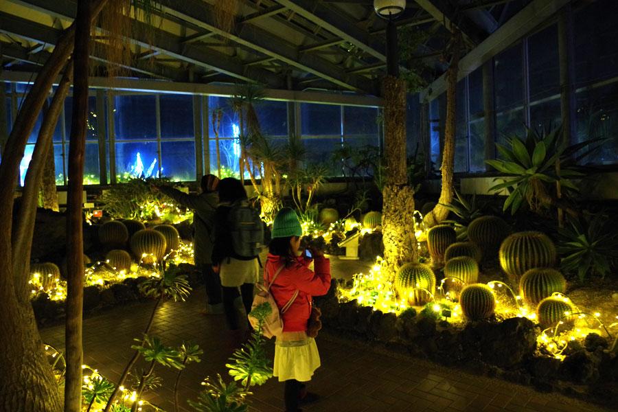 サボテンがやわらかい灯りに浮かび上がる、幻想的な温室内(15日・花の文化園)