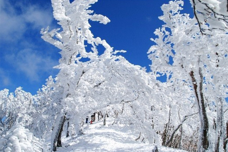 奈良「高見山」(吉野郡吉野村)の霧氷