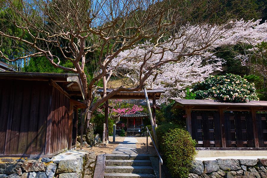 夏は数え切れない風鈴が吊される「風鈴まつり」も有名な正寿院