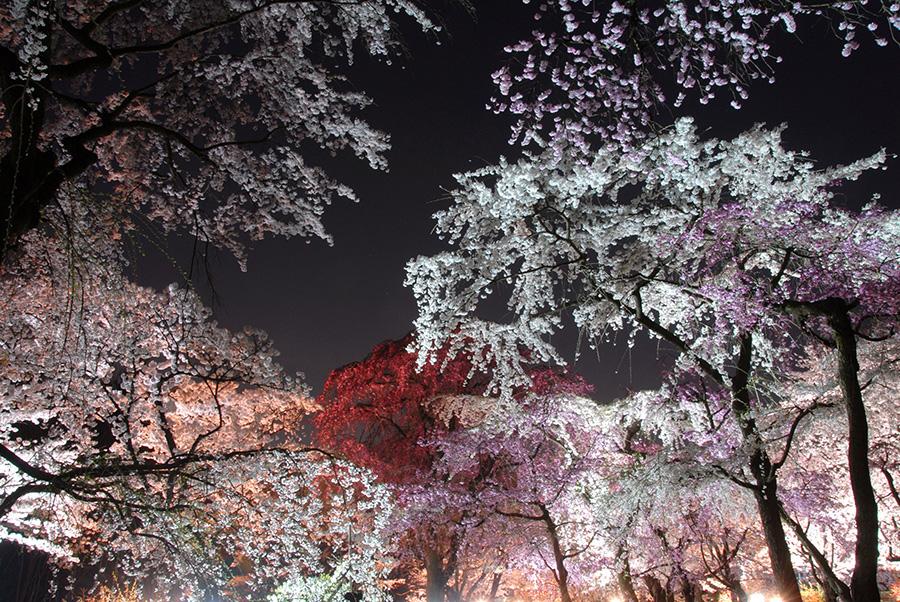 京都府立植物園で通常営業に加え、期間限定で夜も営業