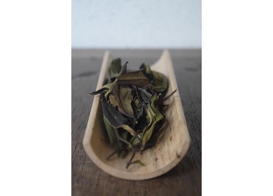 中国や台湾で選んだ、お茶を提供予定
