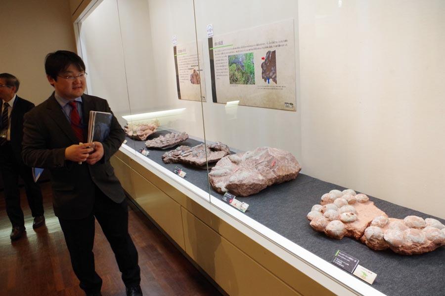 同じ場所にたくさんの卵が産みつけられた化石が何種類も。左は展示を解説する学芸員・田中嘉寛さん