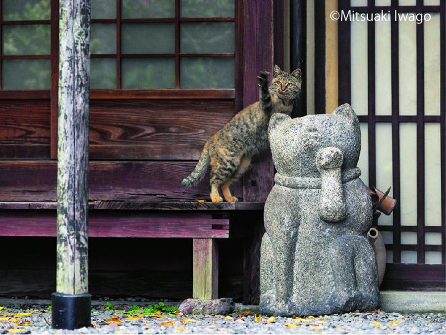 カメラマン・岩合光昭が撮影した京都のねこ