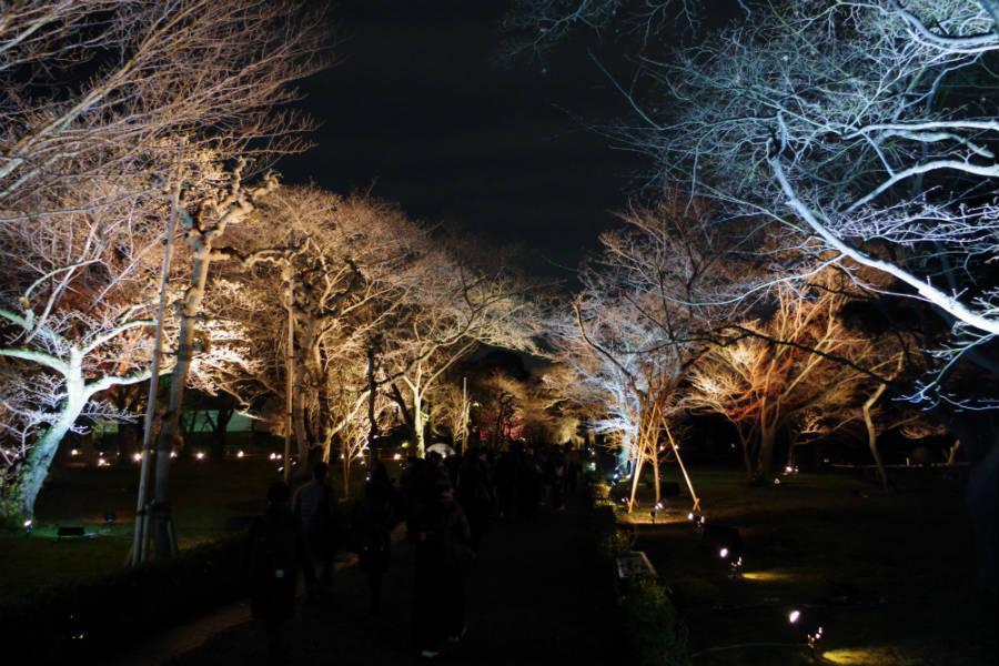 桜のトンネルも日が暮れるとゆっくりと変化する光のアートへと一変