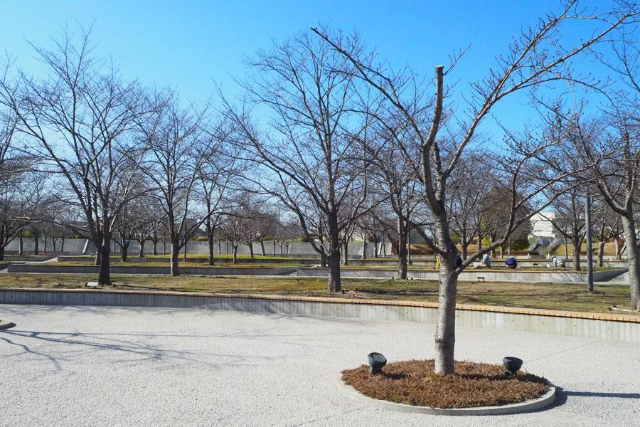 ソメイヨシノ190本を配した桜一色の「さくら広場」。年間を通じて自然を楽しむことができる