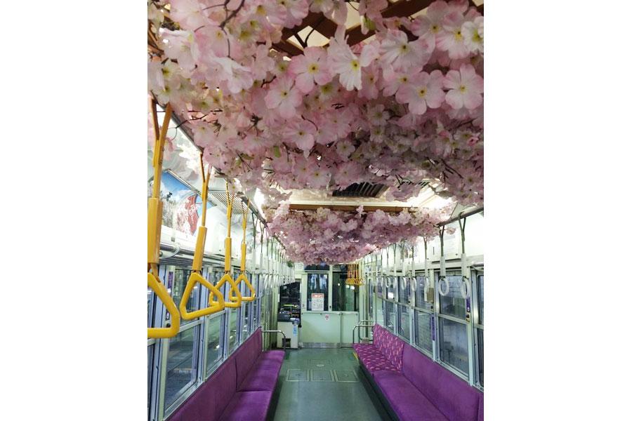 多くの桜で装飾された車内