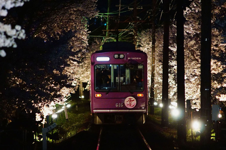 ライトアップされた「桜のトンネル」をゆっくりと走行する夜桜電車