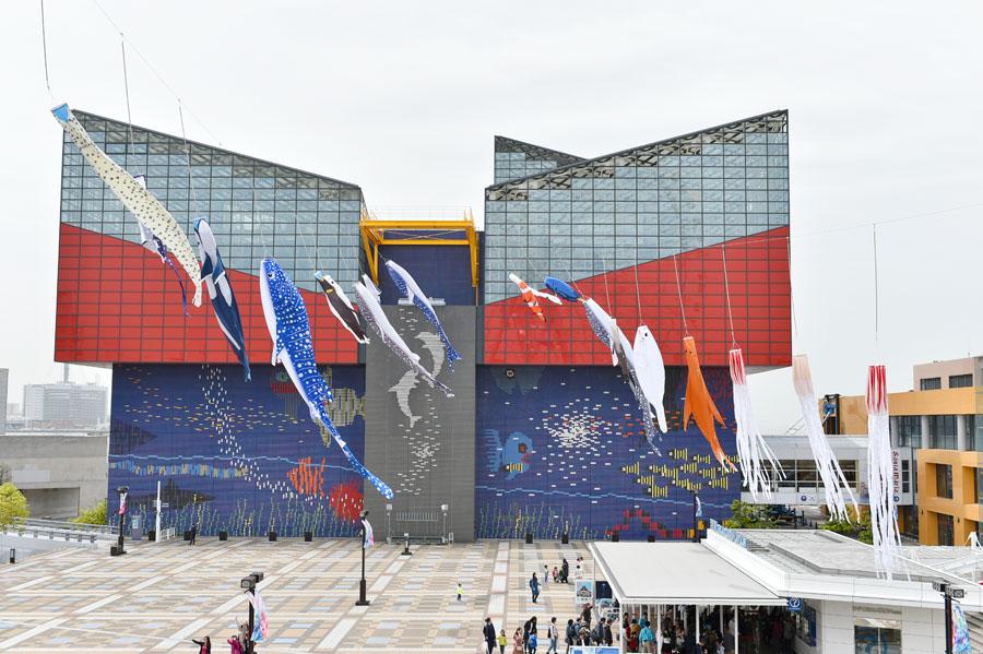 気持ちよさそうに空を舞う「海遊館」の生きもののぼり(17日、大阪市内)