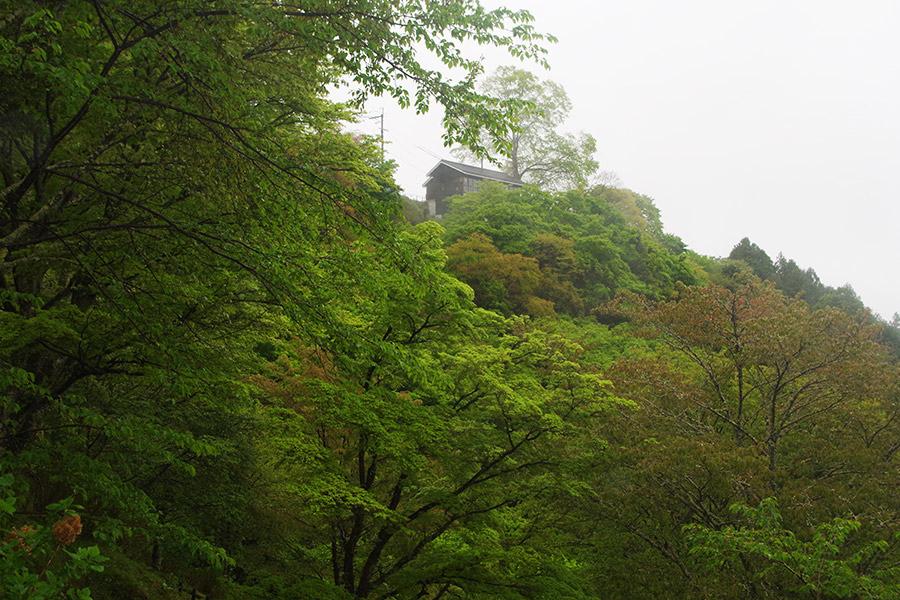 葉桜で彩られた吉野山、下千本(奈良県吉野郡)