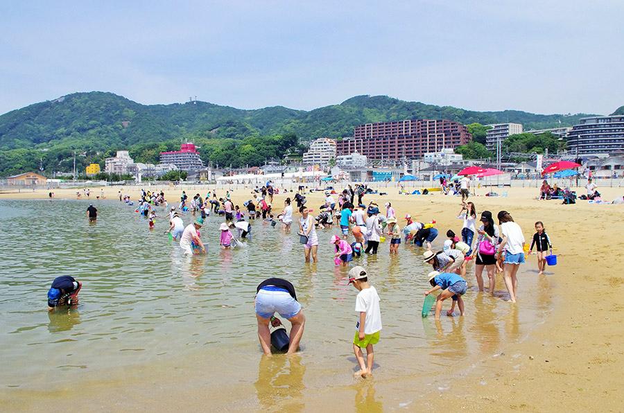 家族連れでにぎわう潮干狩は6月3日まで開催。大人1600円(800g持ち帰り可)、小人800円(400g持ち帰り可)