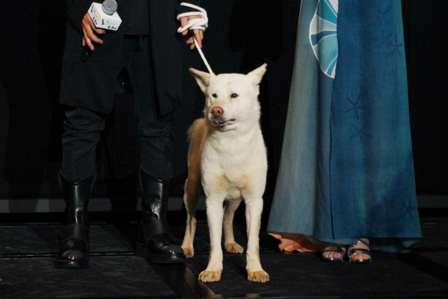 サプライズゲストとして舞台挨拶に登場した猟犬のコウ