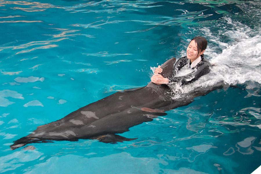 イルカの背びれにつかまってプールを1周泳げるというアトラクション