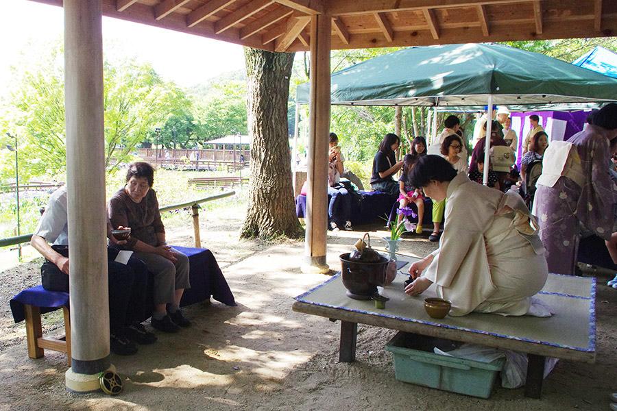 菖蒲が一望できるところに作られた野外の茶席(9日・枚方市)
