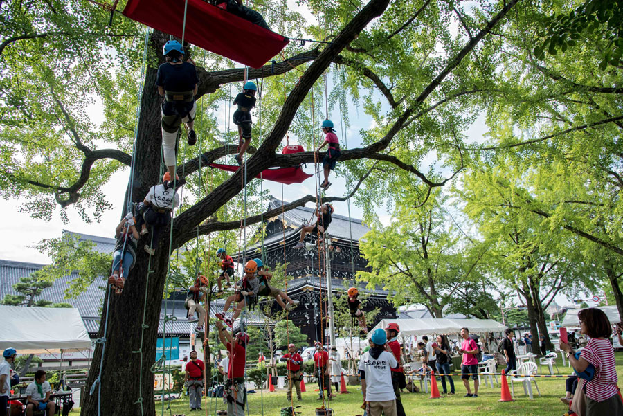 東本願寺前の大きなイチョウの木に登るツリークライミングも登場