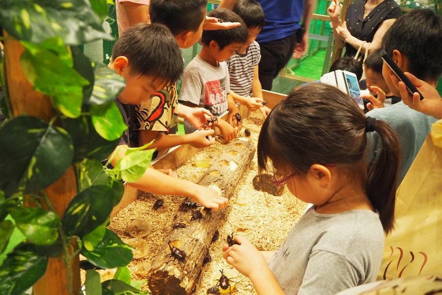 「カブトドーム」の中で夢中になる子どもたち(8日、大阪市内)「カブトドーム」の中で夢中になる子どもたち(8日、大阪市内)