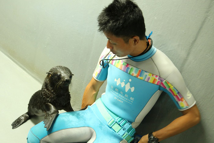飼育スタッフに甘えるオットセイの赤ちゃん