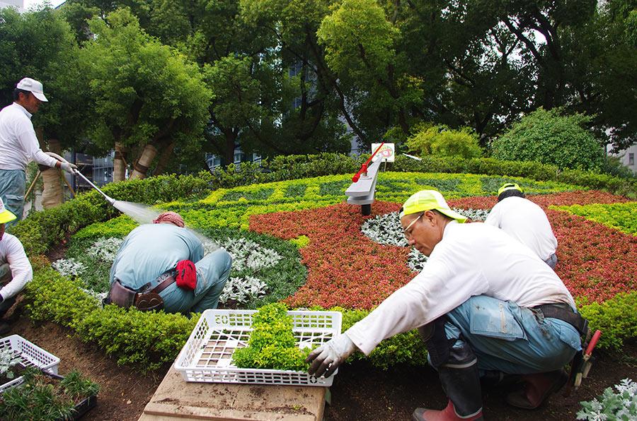 午前9時からスタートした「こうべ花時計」植え替え作業の様子(6日・神戸市内)