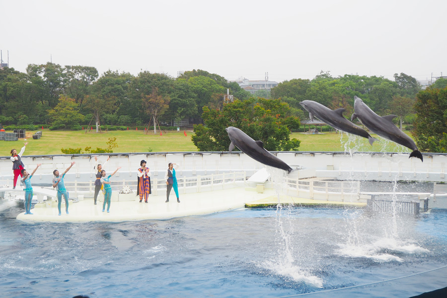 「イルカたちが3人揃って飛んだところは迫力があってすごかった」と川栄