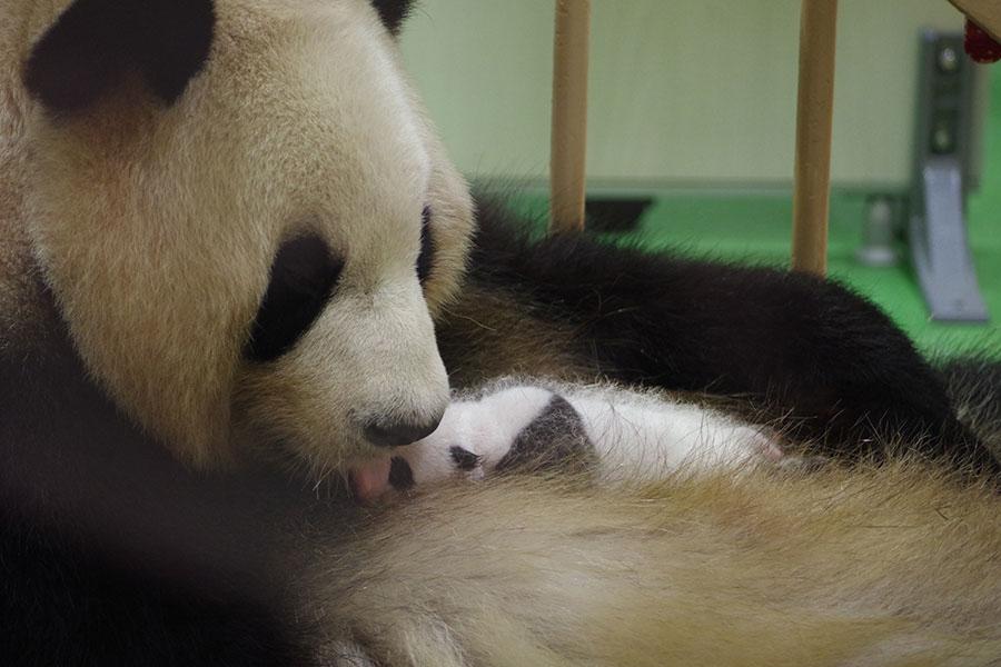 授乳中、赤ちゃんを舐める仕草を見せる母親・良浜