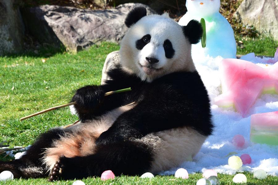 8月に赤ちゃんが誕生し、お姉さんパンダとなった結浜