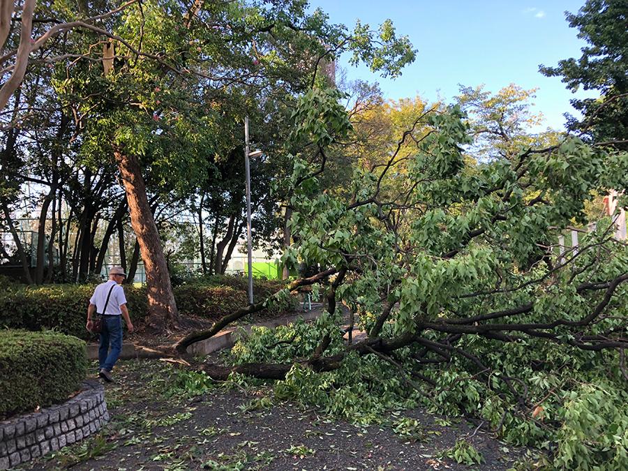 中ノ島公園(吹田市)では、大木がなぎ倒されている。葉の付いた枝もあちこちに散乱