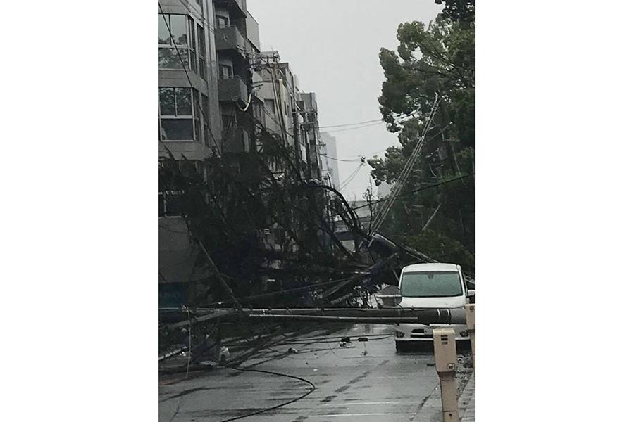 大阪市内の大川沿い。電柱と並木が共倒れに