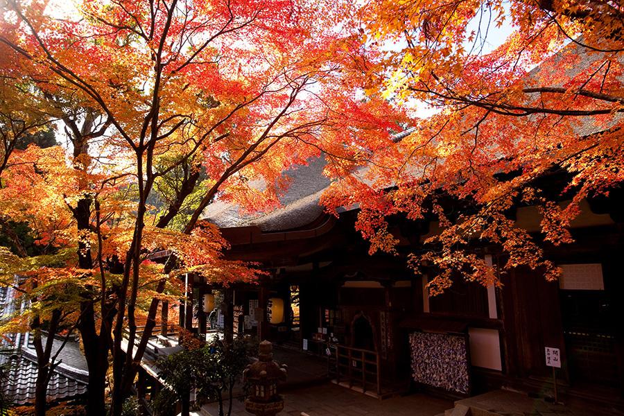 美しい紅葉も一緒に楽しめる。「第十三番札所 石山寺」(滋賀県大津市)は「如意輪観音半跏像」を特別公開