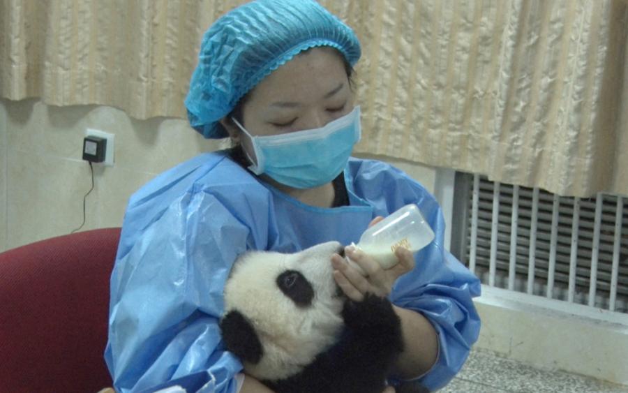 パンダと向き合う女性、中国で密...