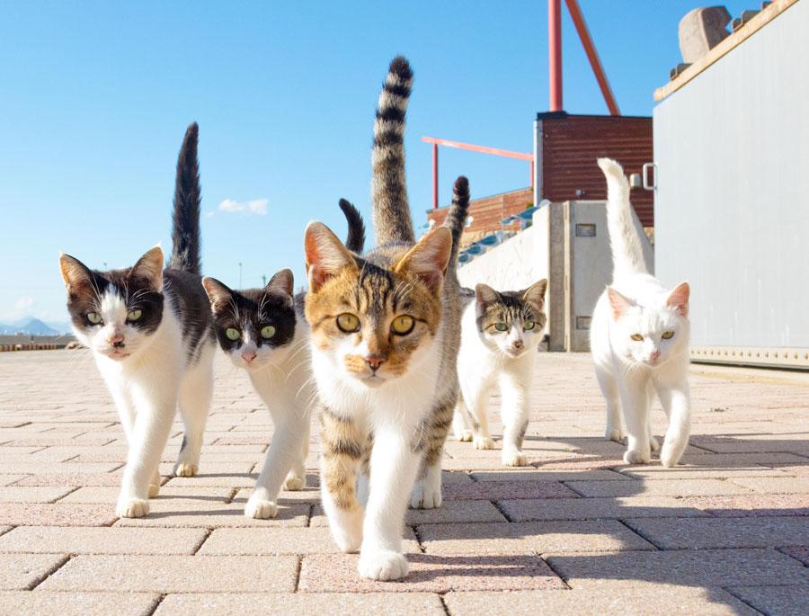 猫たちのかわいい姿を切り取った山本正義さんの作品より (C) 山本正義