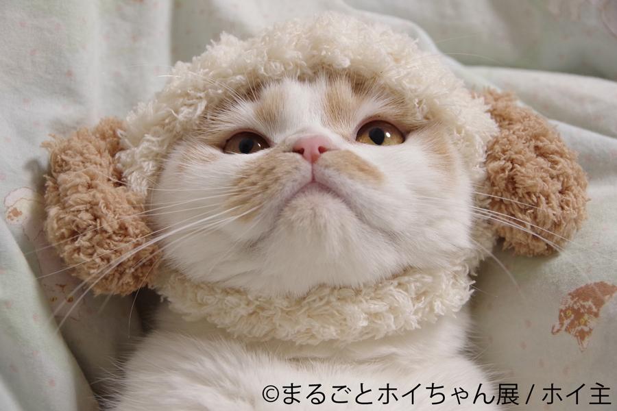 甘えん坊猫のホイちゃん