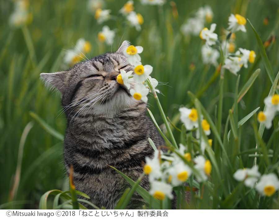 猫が島の自然に溶け込む姿が楽しめる