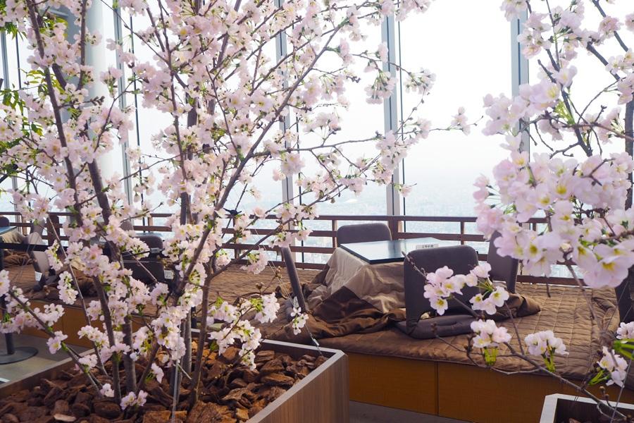こたつに入りながら、大阪の絶景と桜を眺めるという非日常体験