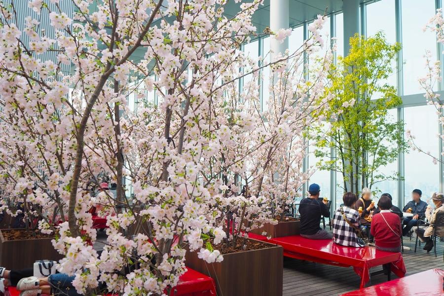 地上300mの絶景とともに花見を楽しむ人々(29日・大阪市内)