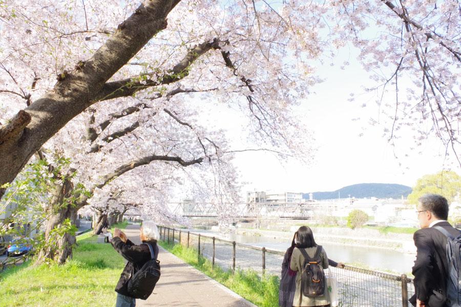 劇場のすぐそばを鴨川が流れ、春は桜で彩られる