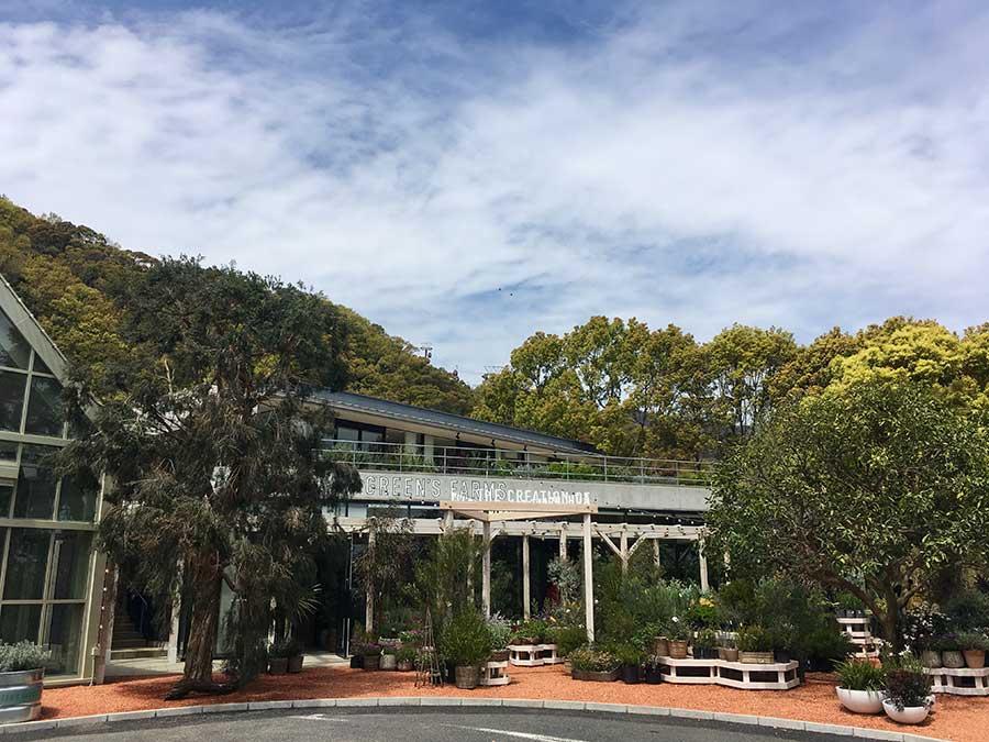 「グリーンズファームス」のエントランスには、枝垂れた大きなティーツリーが植えられている