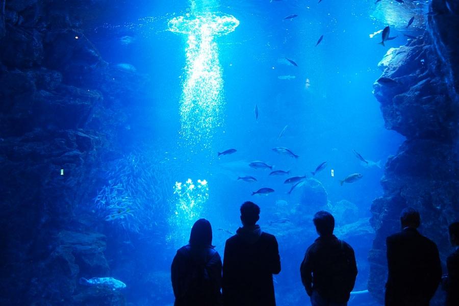 「京都水族館」内の「京の海」大水槽