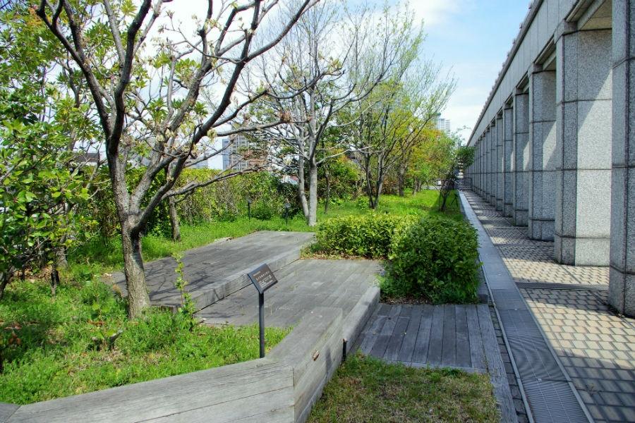 さまざまな野草を配置大阪市役所本庁舎屋上の北ブロック(12日)