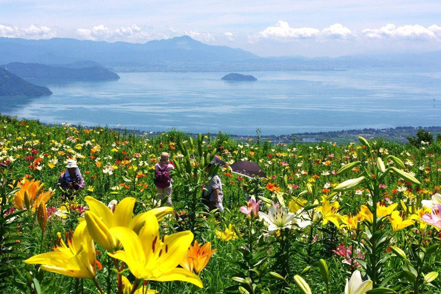 琵琶湖をのぞむ山上に、約50種、約250万輪のゆりが咲き誇る「びわこ箱館山ゆり園」