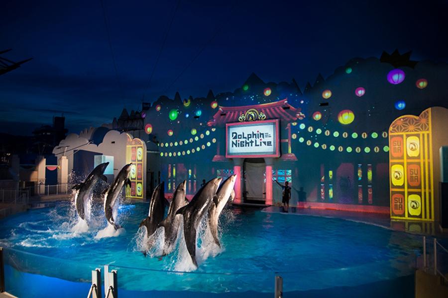 イルカのパフォーマンスとプロジェクションマッピングが融合したショー