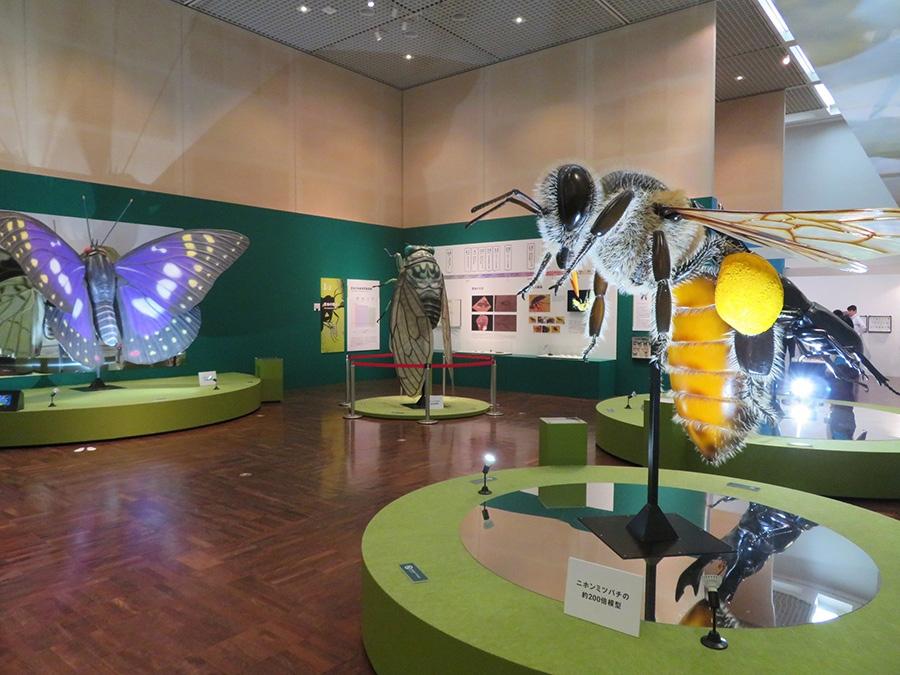 展覧会の冒頭を飾る全長約2メートルの巨大昆虫模型。ミツバチなら実物の200倍の大きさだ