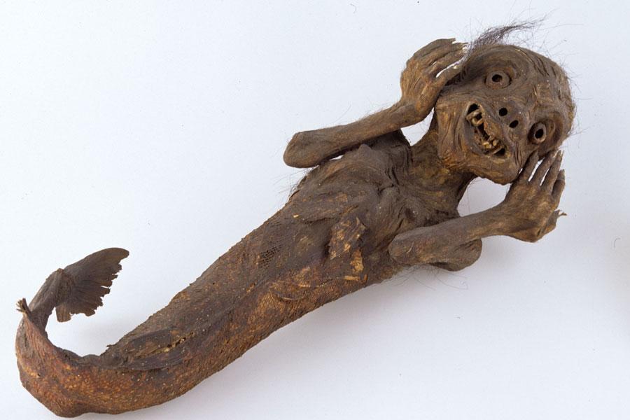 「人魚のミイラ」ライデン国立民族学博物館 Collection Nationaal Museum van Wereldcuturen. Coll.no. RV-360-10410