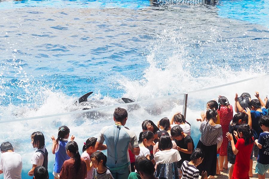 イルカのアクションから上がる激しい水しぶきでびしょ濡れになる子どもたち(10日・京都水族館)